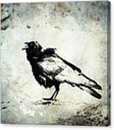 Raven On Blue Canvas Print