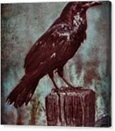 Raven Perched On A Post Canvas Print