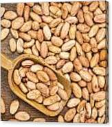 Raw Cacao Beans Canvas Print