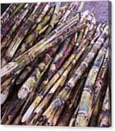 Raw Cane Canvas Print