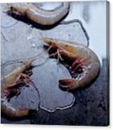 Raw Shrimp Canvas Print