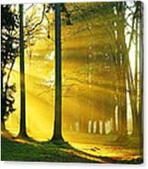 Rays Of Sun Canvas Print