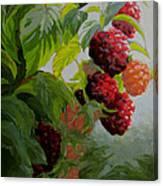 Razzleberries Canvas Print