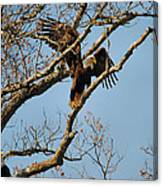 Reach For New Heights Canvas Print