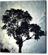Reach For The Sky .. Canvas Print