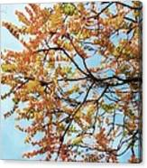 Reaching Autumn Canvas Print