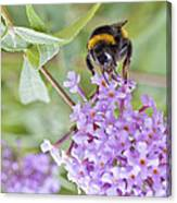 Reaching For Nectar Canvas Print
