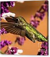Reaching For The Nectar Canvas Print