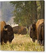 Ready To Fight Canvas Print