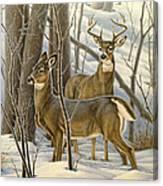 Ready - Whitetail Deer Canvas Print
