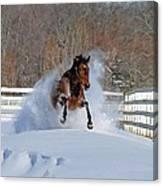Real Horse Power Canvas Print