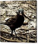 Really It Is Mine- Says The Grackle Bird Canvas Print