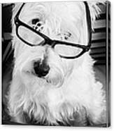 Really Portait Of A Westie Wearing Glasses Canvas Print