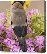 Rear View Of Female Bullfinch Standing Canvas Print