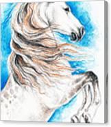 Rearing Andalusian Horse Canvas Print