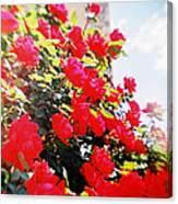 Recesky - Bright Roses Canvas Print