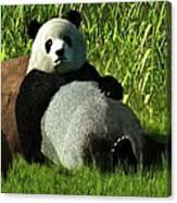 Reclining Panda Canvas Print
