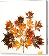 Reconstructed Full Moon Maple Canvas Print