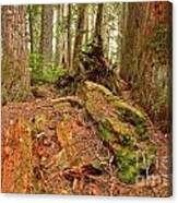 Recycling In The Cheakamus Rainforest Canvas Print