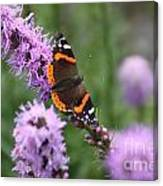 Red Admiral Butterfly On A Blazing Star Canvas Print