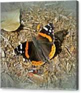 Red Admiral Butterfly - Vanessa Atalanta Canvas Print