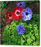 Red And Blue Anemones Canvas Print