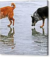 Red And Blue Heelers Canvas Print