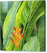 Red And Gold Heliconia Canvas Print