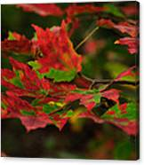 Red And Green Autumn Leaves Canvas Print