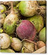 Red And Green Radishes Canvas Print