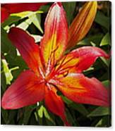 Red And Orange Lilly In The Garden Canvas Print