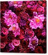 Red And Pink Cut Flowers, Close Up Canvas Print