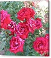 Red And Pink Roses Canvas Print