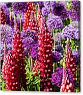 Red And Purple #1 Canvas Print