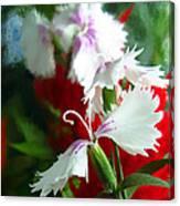 Dianthus Canvas Print