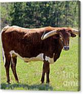 Red And White Texas Longhorn Bull Canvas Print