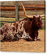 Red And White Texas Longhorn Canvas Print