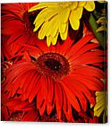 Red And Yellow Glory - The Flowers Of Summer - Gerbera Daisies Canvas Print