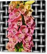 Red And Yellow Hollyhocks Canvas Print