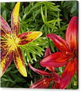 Red And Yellow Lilly Flowers In The Garden Canvas Print