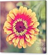 Red And Yellow Zinnia II Canvas Print