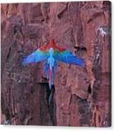Red Arara Canvas Print