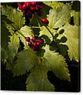 Red Baneberry   #8955 Canvas Print