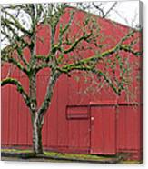 Red Barn And Green Tree In Dundee Hills Oregon Wine Country Canvas Print