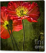 Red Beauties In The Field Canvas Print