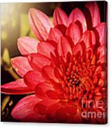 Red Beauty Welcomes The Sun - Flowers Of Summer Canvas Print