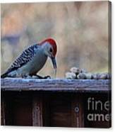 Red Bellied Woodpecker 2 Canvas Print