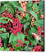 Red Berries And Green Leaves Canvas Print