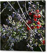 Red Berries And Violet Flowers Canvas Print