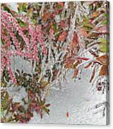 Red Berries Over Snow Canvas Print